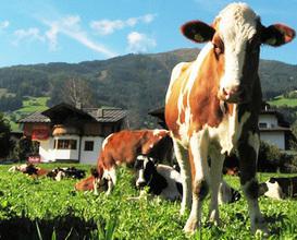 Culture in Austria