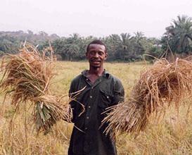 Culture in Sierra Leone